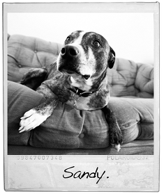 In memoriam - Sandy